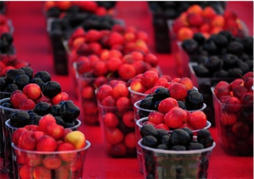 Traverse City National Cherry Festival: Top 5 Favorite Festival Picks